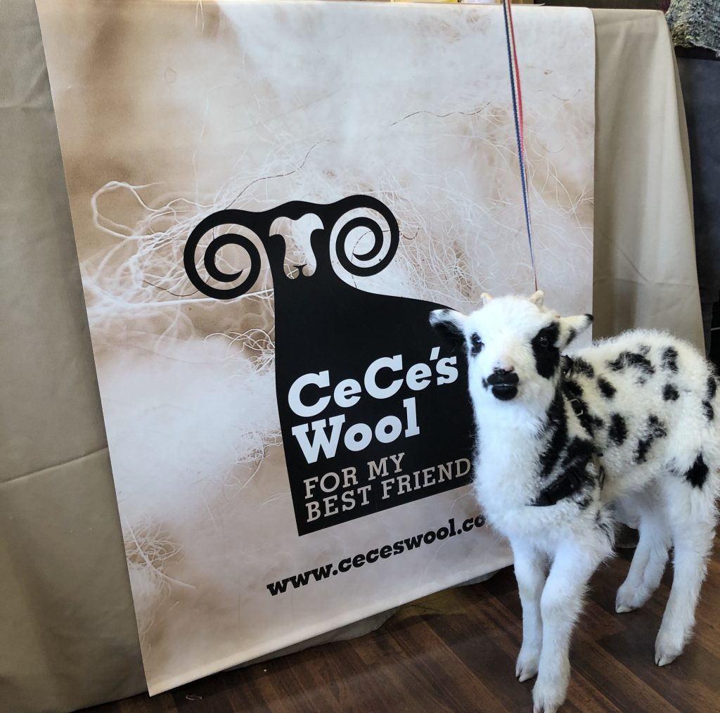 CeCe's Wool, logo banner with young sheep standing in front of it.